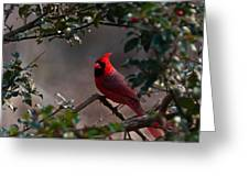 Male Cardinal Greeting Card by Ron Smith