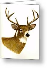 Male Deer Greeting Card by Michael Vigliotti