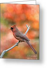 Male Northern Cardinal - D007810 Greeting Card by Daniel Dempster
