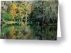 Manatee Spring Florida Greeting Card by Ronald T Williams