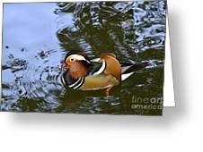 Mandarin Duck 04 Greeting Card by Arik Baltinester