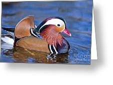 Mandarin Duck Greeting Card by Andrew  Michael