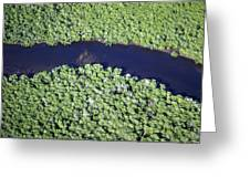 Mangrove River Greeting Card by Alexis Rosenfeld