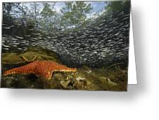 Mangrove Root Habitats Provide Shelter Greeting Card by Tim Laman