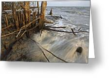 Mangrove Trees Protect The Coast Greeting Card by Tim Laman