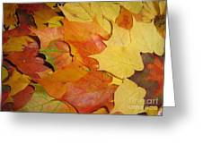 Maple Rainbow Greeting Card by Ausra Paulauskaite