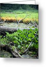 Marsh Greeting Card by Jeannie Burleson