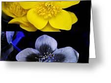 Marsh Marigold In Uv Light Greeting Card by Cordelia Molloy