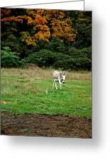 Marys Donkey Greeting Card by LeeAnn McLaneGoetz McLaneGoetzStudioLLCcom