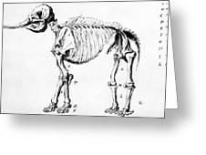 Mastodon Skeleton Drawing Greeting Card by Science Source