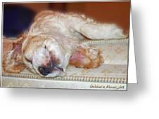 Mattress Tester Greeting Card by Debbie Portwood