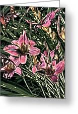 Meadow Sunrise Greeting Card by Tom Prendergast