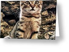 mediterranean wild babe cat Greeting Card by Stylianos Kleanthous