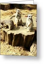 Meerkat Trio Greeting Card by Jan Steadman-Jackson
