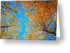 Meet In Heaven. Autumn Glory Greeting Card by Jenny Rainbow