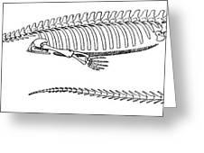 Mesosaurus Brasiliensis Greeting Card by Science Source