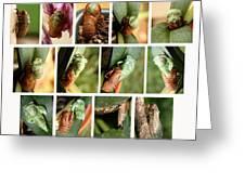 Metamorphosis Of A Cicada Greeting Card by Emanuel Tanjala