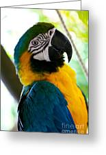 Mexican Parrot Greeting Card by Natalia Babanova
