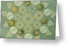 Microscopic Arrangement Greeting Card by Darlyne A. Murawski