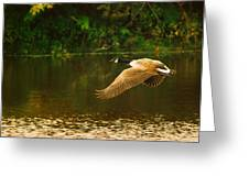 Midmorning Launch Greeting Card by Susan Capuano