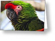 Military Macaw Parrot Greeting Card by Adam Romanowicz