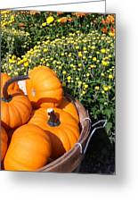 Mini Pumpkins Greeting Card by Kimberly Perry