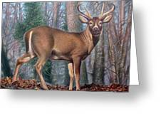 Missouri Whitetail Deer Greeting Card by Hans Droog