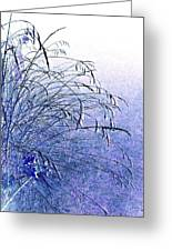 Misty Blue Greeting Card by Will Borden