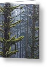 Misty Mystical Moss Forest Greeting Card by Paul W Sharpe Aka Wizard of Wonders