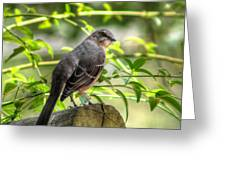 Mocking Bird Greeting Card by Ester  Rogers