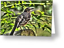 Mocking Bird Picture 2 Greeting Card by Ester  Rogers