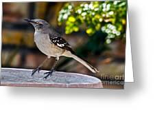 Mocking Bird Greeting Card by Robert Bales