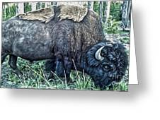 Molting Bison In Yellowstone Greeting Card by Gregory Dyer