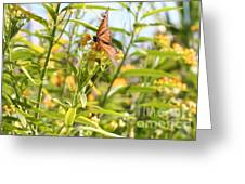Monarch Is Indeed King Of The Butterflies Greeting Card by Dustie Meads