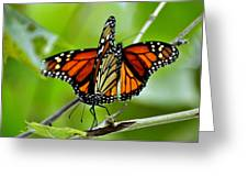 Monarchs Deluxe Greeting Card by Marty Koch