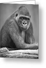 Monkey Greeting Card by Darren Greenwood