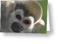 Monkey Face Greeting Card by Danielle Del Prado