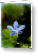 Moon Flower Greeting Card by Judi Bagwell
