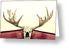 Moose Trophy Greeting Card by Priska Wettstein