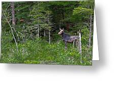 moose3 Greeting Card by Rich OConnor