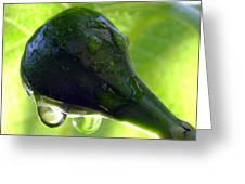 Morning Dew Figs Greeting Card by Karen Wiles