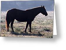 Morning Equine Greeting Card by Mark J Seefeldt