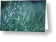 Morning Grass Greeting Card by Gabriela Insuratelu
