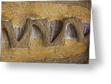 Mosasauras Teeth Greeting Card by Garry Gay