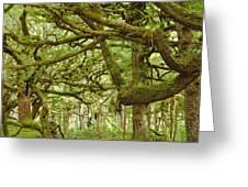 Moss-covered Trees Greeting Card by David Nunuk