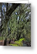 Moss Covered Trees Greeting Card by Garry Gay