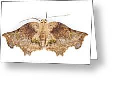 Moth Braulio Carrillo Np Costa Rica Greeting Card by Piotr Naskrecki
