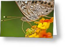 Moth On Flower Clusters Greeting Card by Lisa  Spencer