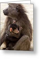 Mother And Baby Chacma Baboon Greeting Card by Bob Gibbons