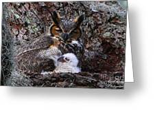Mother And Baby Owl Greeting Card by Barbara Bowen